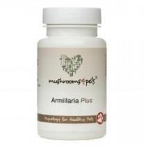 Armillaria Plus - 60 capsules